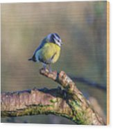 Bluetit On A Branch Wood Print
