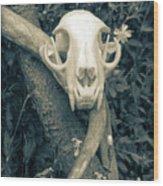 Bobcat Deer Antler Wood Print
