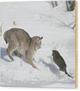 Bobcat Lynx Rufus Hunting Muskrat Wood Print