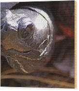 Bog Turtle Wood Print