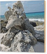 Bonaire Coral And Shells 3 Wood Print