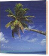 Bora Bora, Palm Tree Wood Print