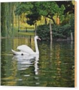 Boston Public Garden Swan Green Reflection Wood Print