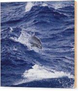 Bottlenose Dolphin Tursiops Truncatus Wood Print