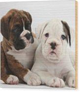 Boxer Puppies Wood Print