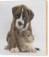Boxer Puppy And Guinea Pig Wood Print