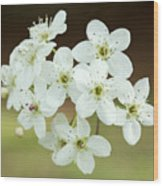 Bradford Pear Flower Wood Print