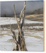 Bristlecone Fog And Sierra Nevada 1 Wood Print