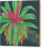 Bromeliad Wood Print by Charles Yates