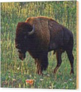Buffalo Custer State Park Wood Print
