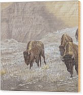 Buffalo Under The Alpenglow Wood Print