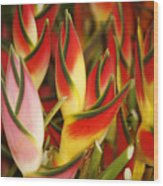 Bunch Of Heliconia Wood Print