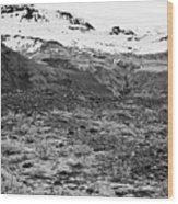 bushes and mosses growing on Skaftafell glacier end moraine Vatnajokull national park in Iceland Wood Print
