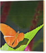 Butterfly 22 Wood Print