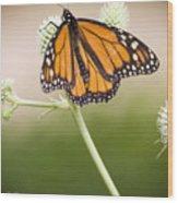 Butterfly In Wait Wood Print