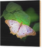 White Peacock Butterfly Wonderland A Series  Wood Print