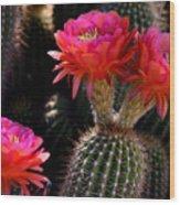 Sonoran Spring Wood Print
