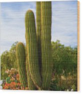 Cactus Monterey California Wood Print