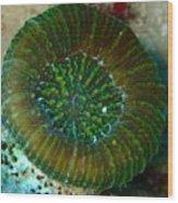 Cactus Ring Coral Wood Print