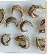Calendula Officinalis Seeds Wood Print