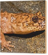 California Giant Salamander Wood Print