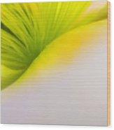 California Poppy Wood Print