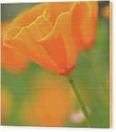 California Spring Poppy Macro Close Up Wood Print