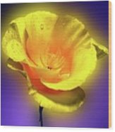 Californian Poppy. Wood Print