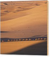 Camel Caravan Crosses The Dunes Wood Print