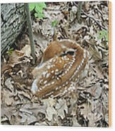 Camouflaged Fawn Wood Print