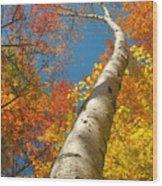 Canadian Autumn Wood Print