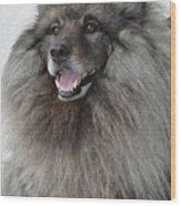 Canine Beauty Wood Print