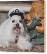 Captain Maltese Dog  Wood Print