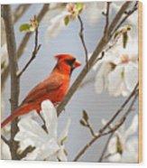 Cardinal In Magnolia Wood Print