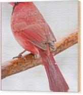 Cardinal Male In Winter Wood Print
