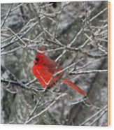 Cardinal On Icy Branches Wood Print