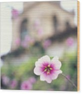 Carmel Mission With Flowers Wood Print