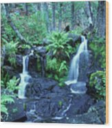 Cascade Creek And Ferns  Wood Print