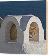 Cat On A Roof, Greece Wood Print