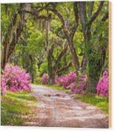 Catalpa Alley Wood Print
