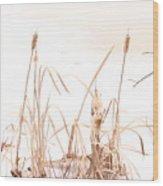 Cattails Wood Print