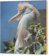 Cattle Egret Profile Wood Print