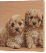 Cavapoo Pups Wood Print by Mark Taylor