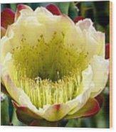 Cereus Cactus Flower Wood Print