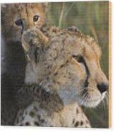 Cheetah Acinonyx Jubatus And Cub Wood Print