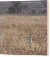 Cheetah In The Tall Grass Wood Print