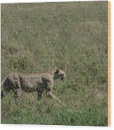 Cheetah On The Serengeti Wood Print