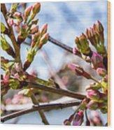Cherry Tree Buds Wood Print