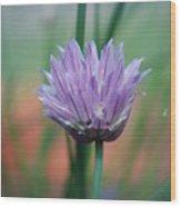 Chive flower  Wood Print