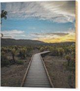 Cholla Cactus Garden, Joshua Tree National Park, Ca Wood Print